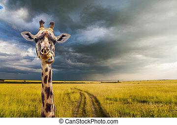 THe cheerful giraffe