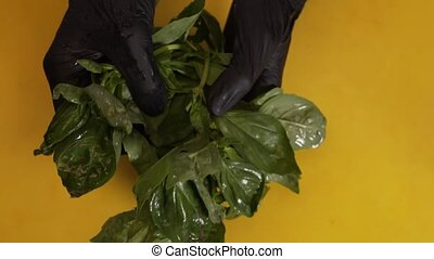 Hands In Black Gloves Wash The Sprigs Of Basil - The Chef's...