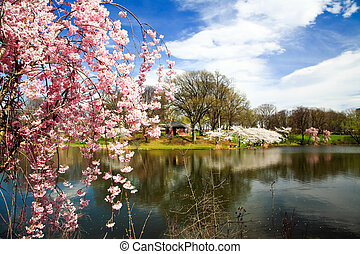 The Cherry Blossom Festival in Branch Brook Park New Jersey