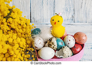 The chicken hatched from the egg on the background of colorful Easter eggs with Mimosa flowers on a blue wooden table.