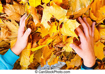 The child collects yellow golden autumn leaves