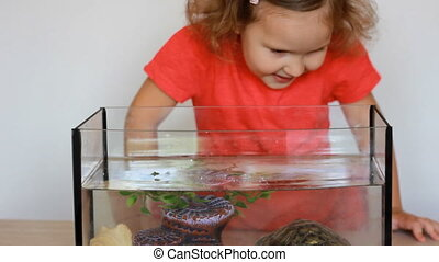 The child feeds, watches and plays for his turtle, who lives in a home aquarium with water