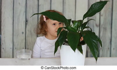 The child looks after the house green plant, watering and...