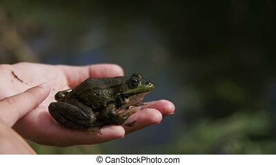 The Child Playing with Green Frog in his Hand. Slow Motion...