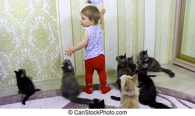 The child plays with cheerful seals Maine Coons - The child...