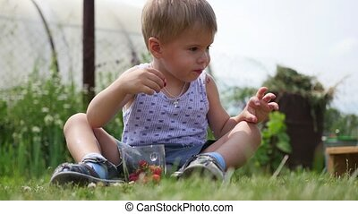 the child sits on the lawn and eats the red berries. garden berries