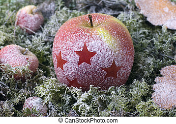 hoarfrost - the Christmas apple are covered with hoarfrost