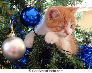 The christmas kitten - a small playing cat in the christmas...