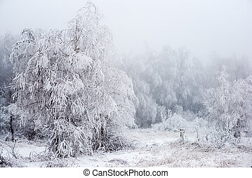 The Christmas mysterious winter snowy forest in a fog,...