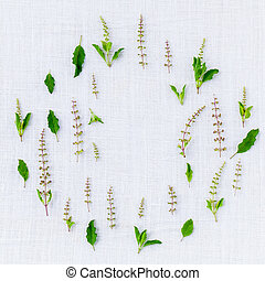 The circle of fresh holy basil flower and holy basil leaves from the garden on white fabric background.