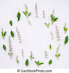 The circle of fresh holy basil leaves and holy basil flower setup with flat lay on white fabric background.