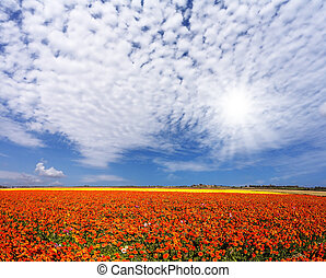 The cirrus clouds - Concept of rural and recreational...