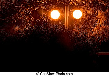 The city lights in a winter town. Foggy and snowy weather. Bushes and trees with white frost.