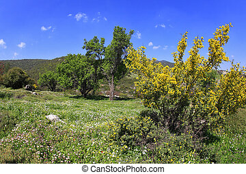 The clear spring day - Vicinities of mountain Meron in clear...