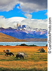 The cliffs Torres del Paine