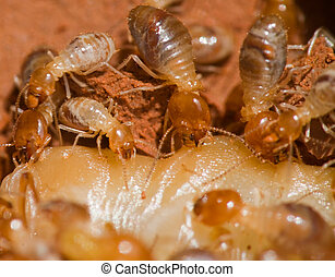 the close-up image of the termite