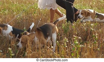 The close-up portrait of the three little dogs walking with the newlyweds in the field.