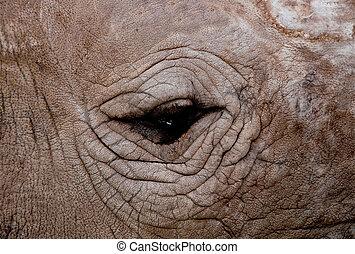 The Closeup eye of rhinoceros