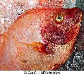 The Closeup of red fish
