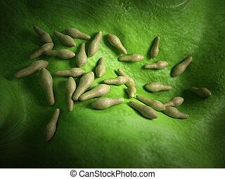 The clostridium - medical bacteria illustration of the...