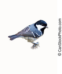 The Coal Tit, isolated (parus ater)