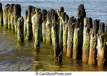 The coast of the Baltic Sea and breakwater of wooden poles