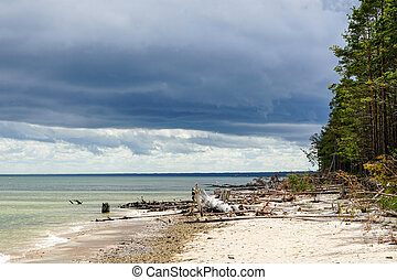 the coast of the gulf of baltic sea with fallen trees before the storm
