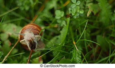 the cochlea creeps and eats in the grass - the cochlea...