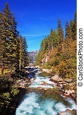 The cold water - Rapid mountain stream of coniferous...