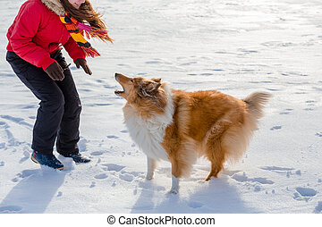 The Collie dog barks at the girl
