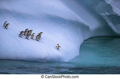 The colony of penguins approaches the water. Andreev.