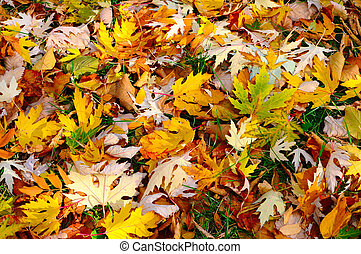 The colourful Autumn Background