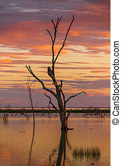 The colours of an outback sunset desert oasis