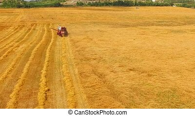 The combine cuts the wheat and sows the hay. bird's-eye...
