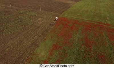 The combine goes through the field with red flowers and ...
