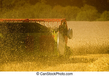 the combine harvester in the field