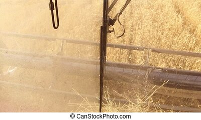 The combine harvester removes the wheat. The view from the...