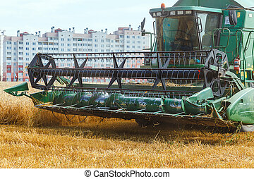 The combine harvests ripe wheat in the grain field. - Grodno...
