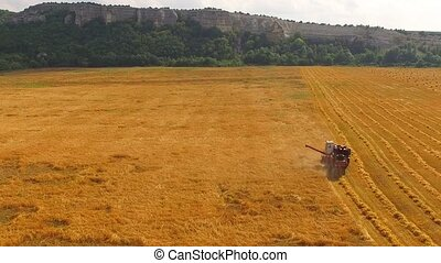 The combine processes the wheat field. bird's-eye view. - A...