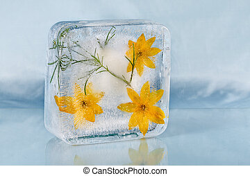 The composition of yellow flowers, frozen in ice.