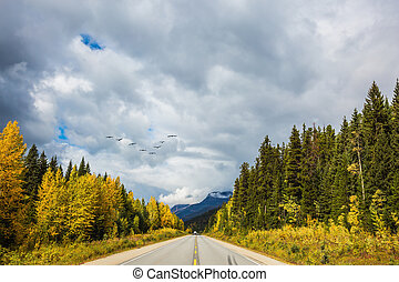 Migratory birds fly in flocks - The concept of active and...
