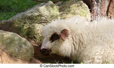 The concept of growing livestock. Milk and sheep wool...