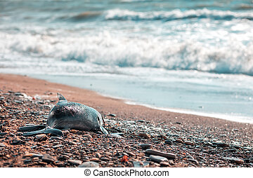 The concept of poaching and environmental disaster. A corpse of a dead baby dolphin lies, washed up by the waves, on the shore. Copy space