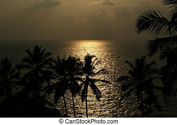 The contours of the coconut palms at sunset and ocean, Kerala, South India