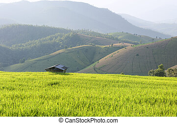 The cottage at the rice paddy field in Chiangmai, Thailand with the sunset scene.