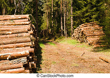 The cut down trees combined together in wood (timber cutting)