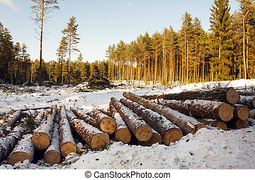 the cut trees - the logs cut and put together for various...