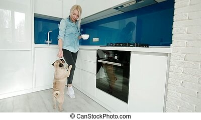 The cute pug asking for the food. Owner deeding the dog with...