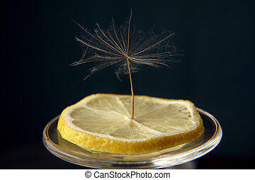 dandelion seed on a slice of lemon