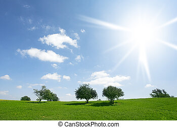 The day in blossoming fields - Clear and warm spring day in...